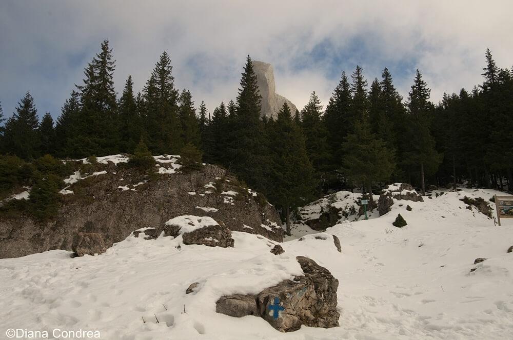 Carpathian moountains