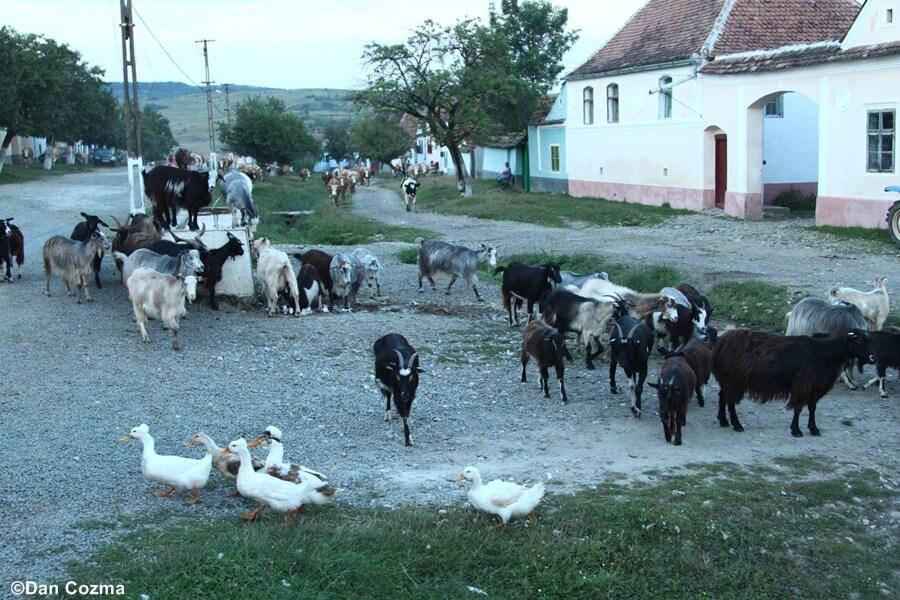 Cycling in Transylvania