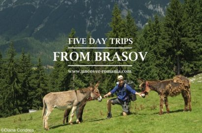 one day trips from brasov