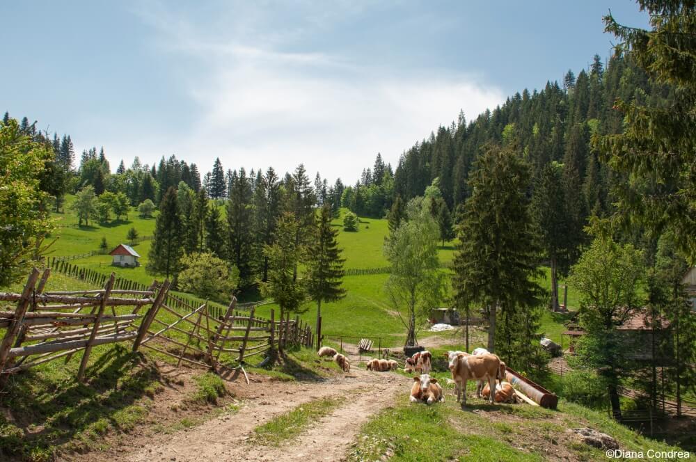 Bicaz Gorges-Hasmas National Park