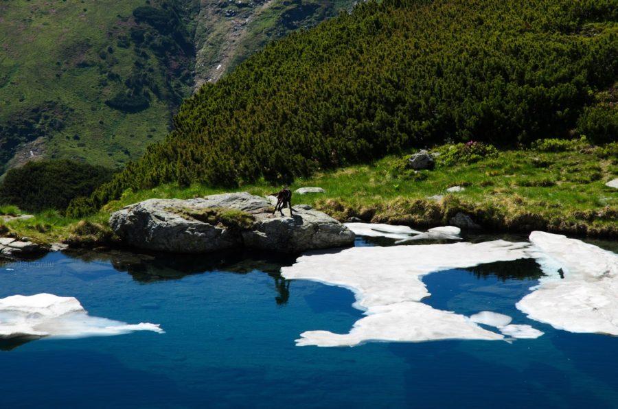 Rodnei Mountains National Park