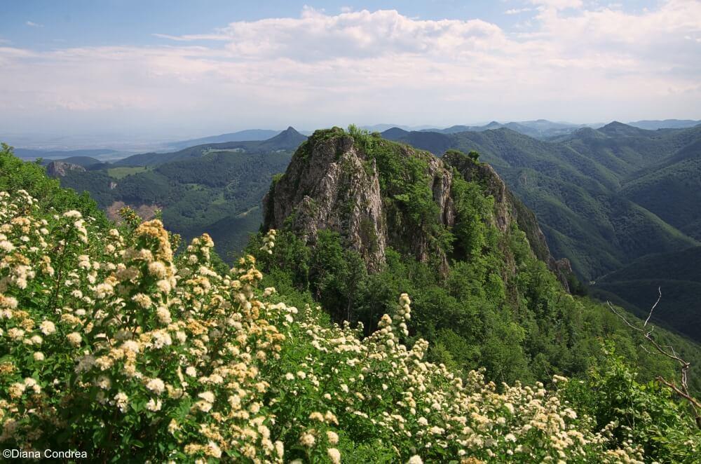 Piatra Cetii, Trascau Mountains