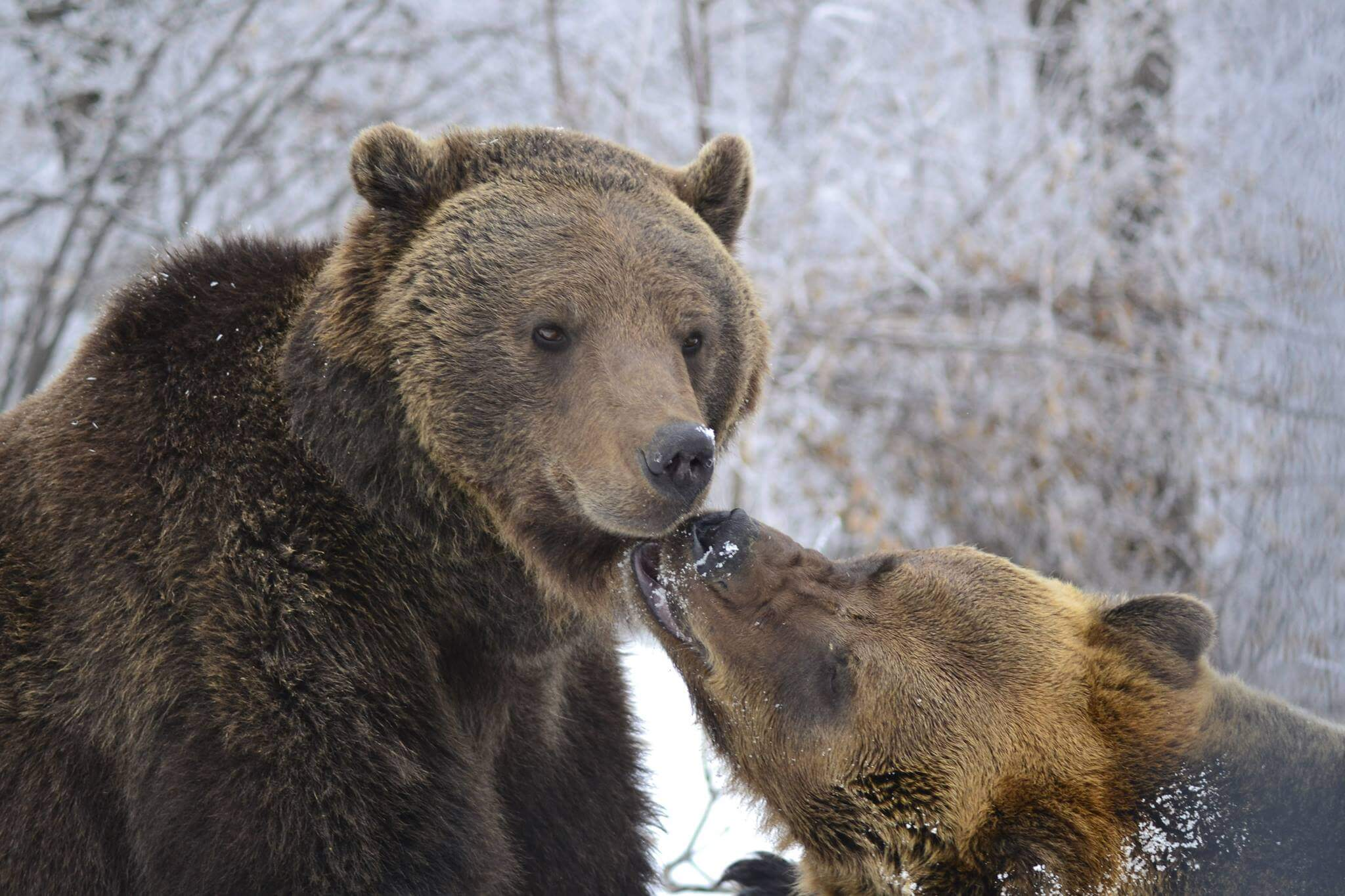 Zarnesti Bear Sanctuary