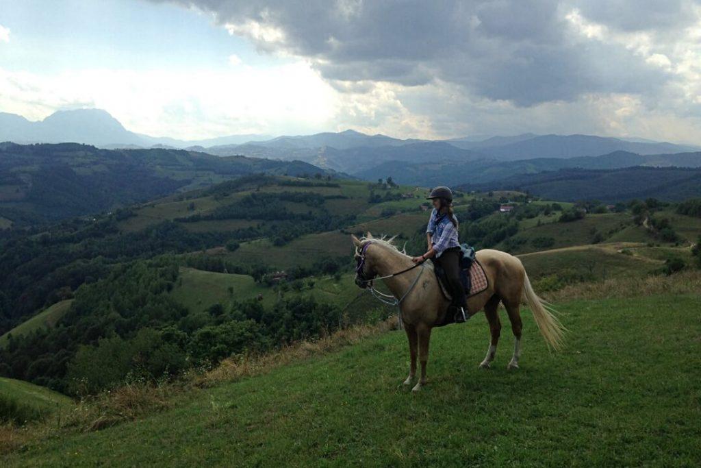 Equus Silvania