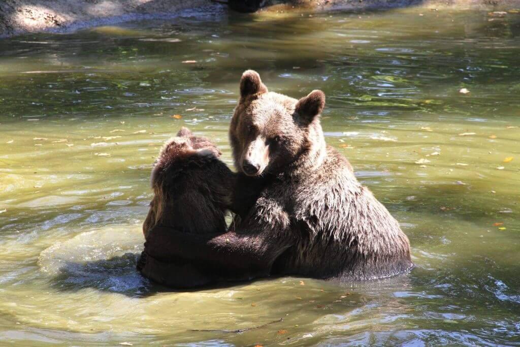 Zarnesti Bear Sanctuary