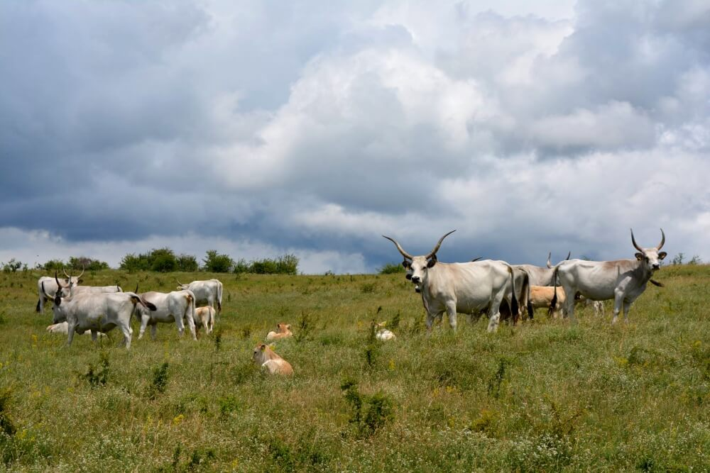 Cobor Farm