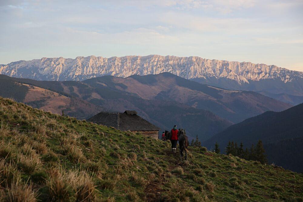 Conservation Carpathia