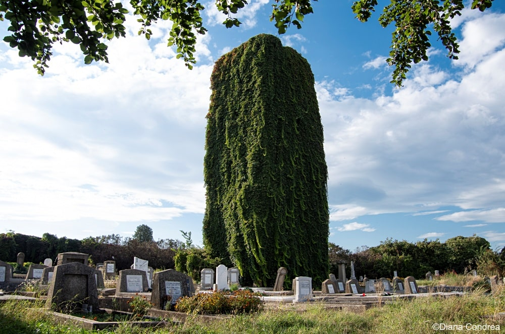 cemeteries you should visit in Romania